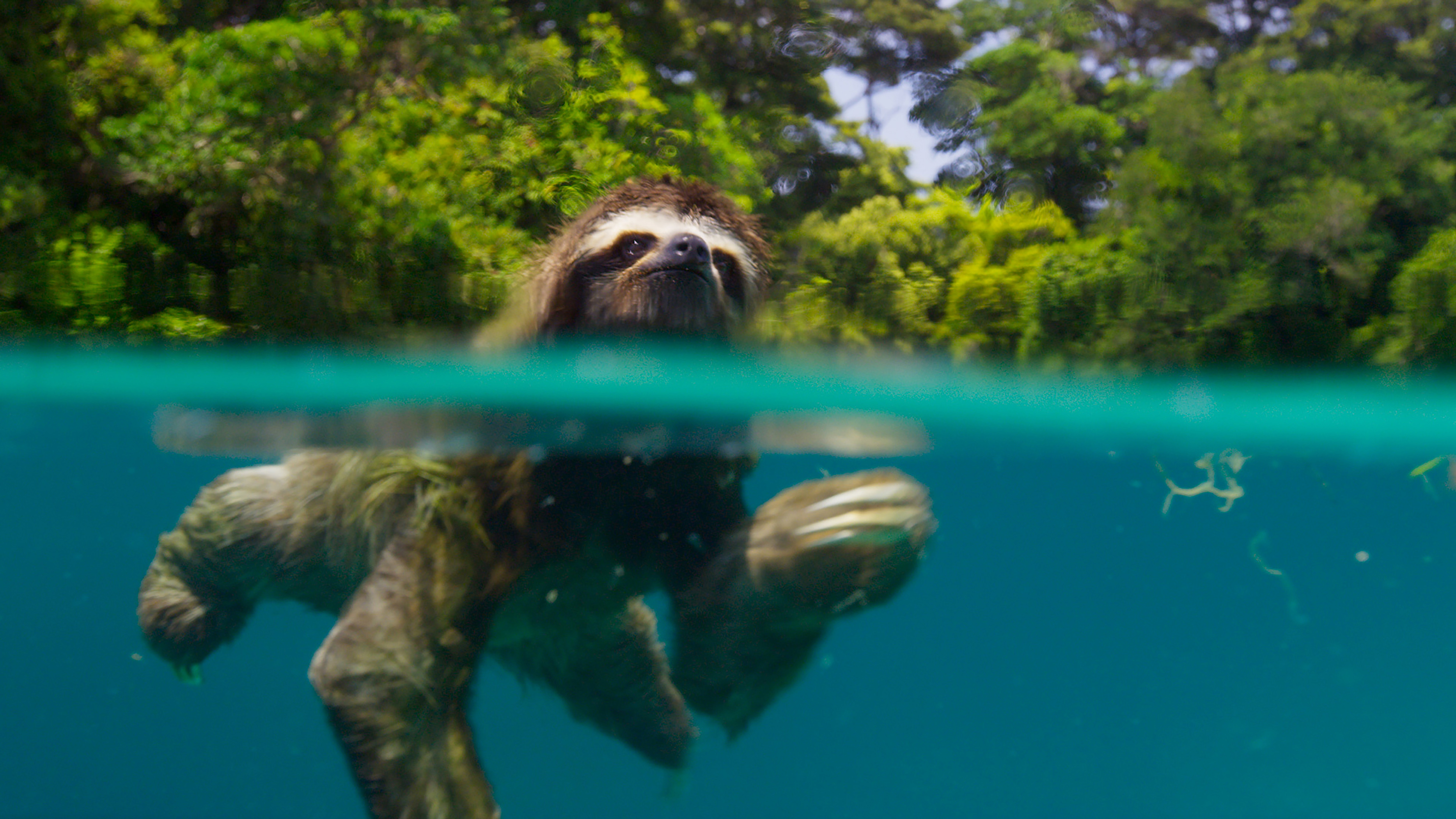 David Attenborough's documentaries may soon be seen as the