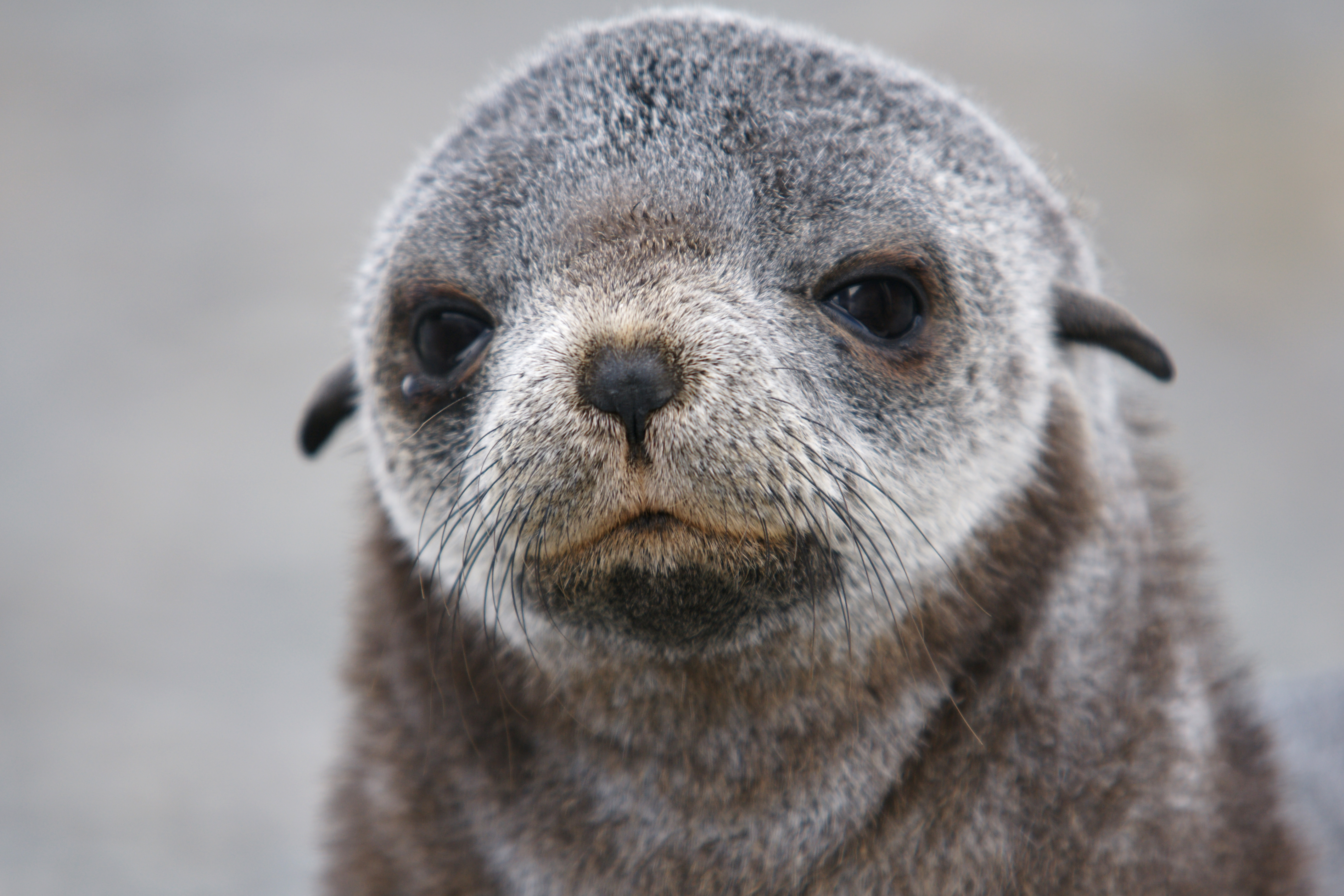 New Zealand seals: Six baby seals were beheaded and dumped