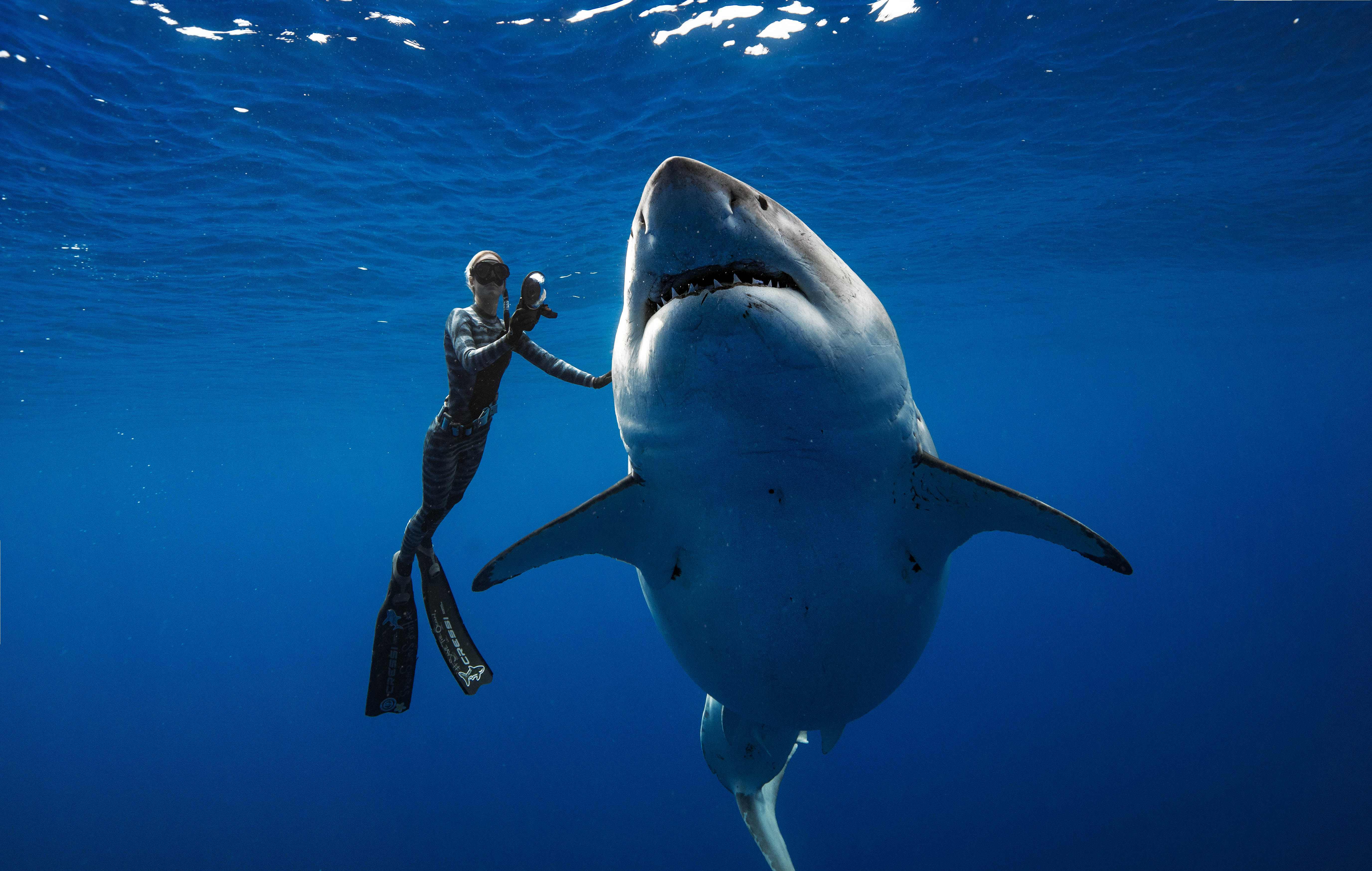 A Well Read Woman Is A Dangerous Creature Meaning ocean ramsey's viral videos with a great white shark upset