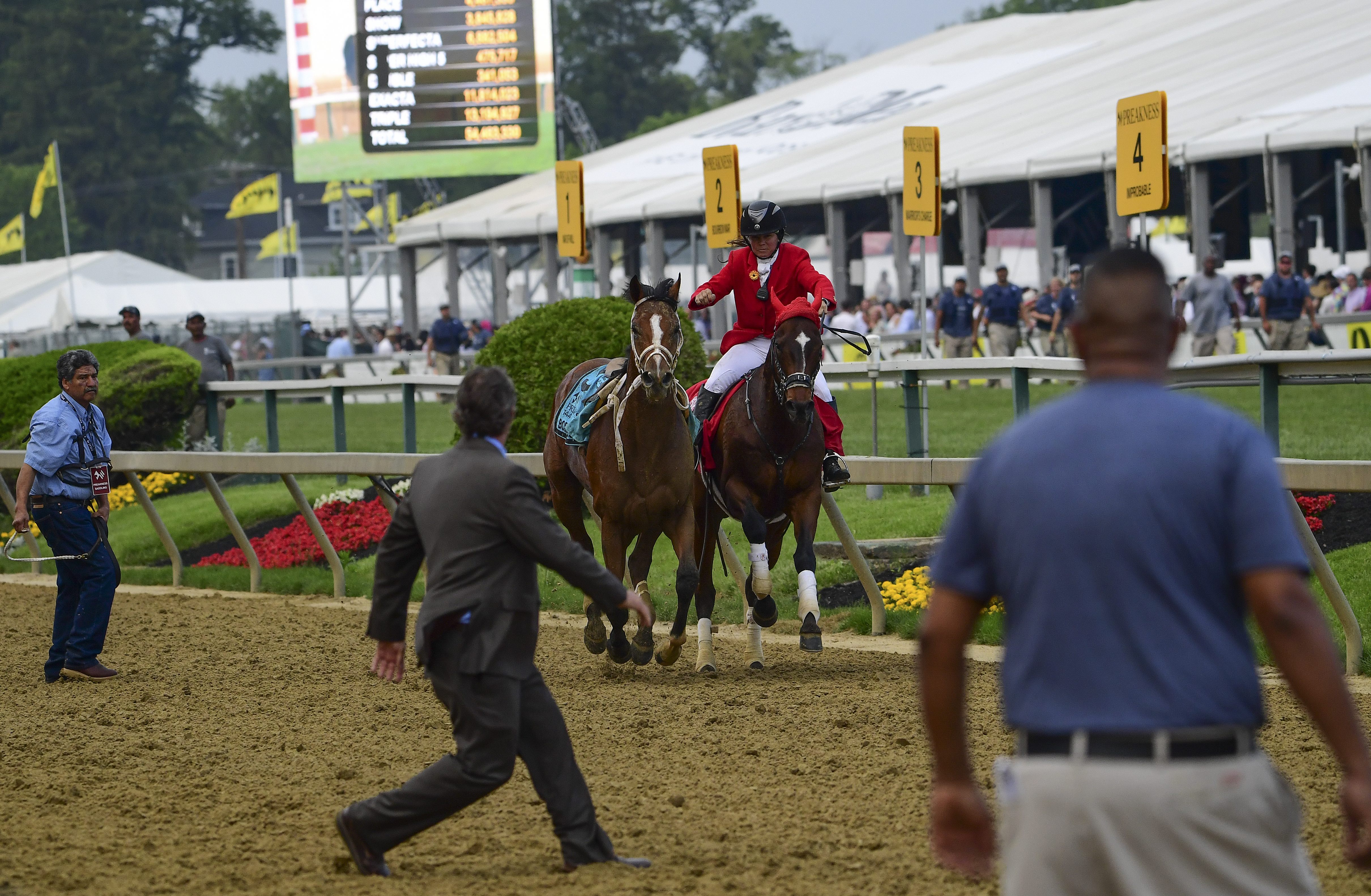 Run free, Bodexpress, people's champion of the Preakness
