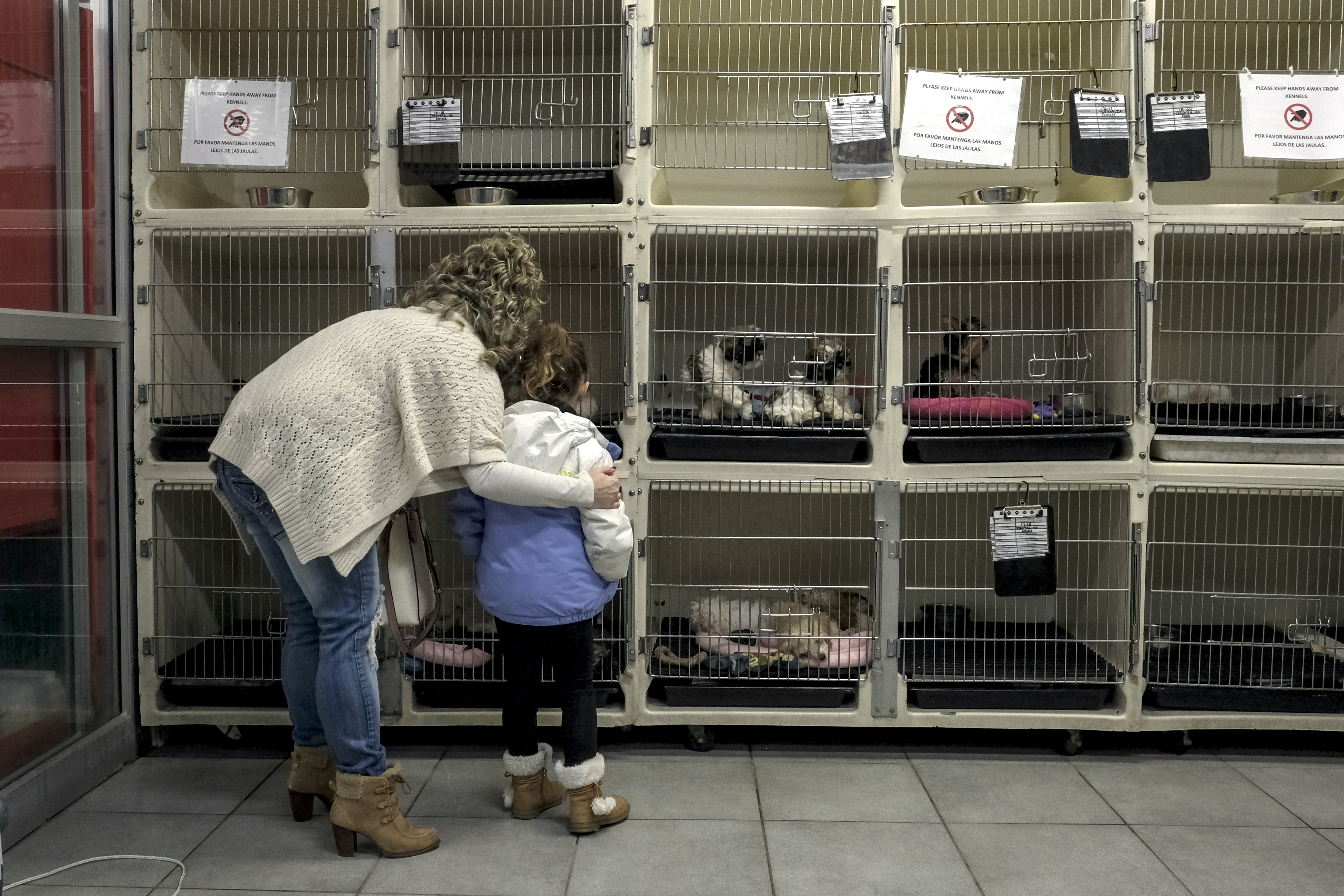 Gov  Hogan signed a law banning Maryland pet stores from