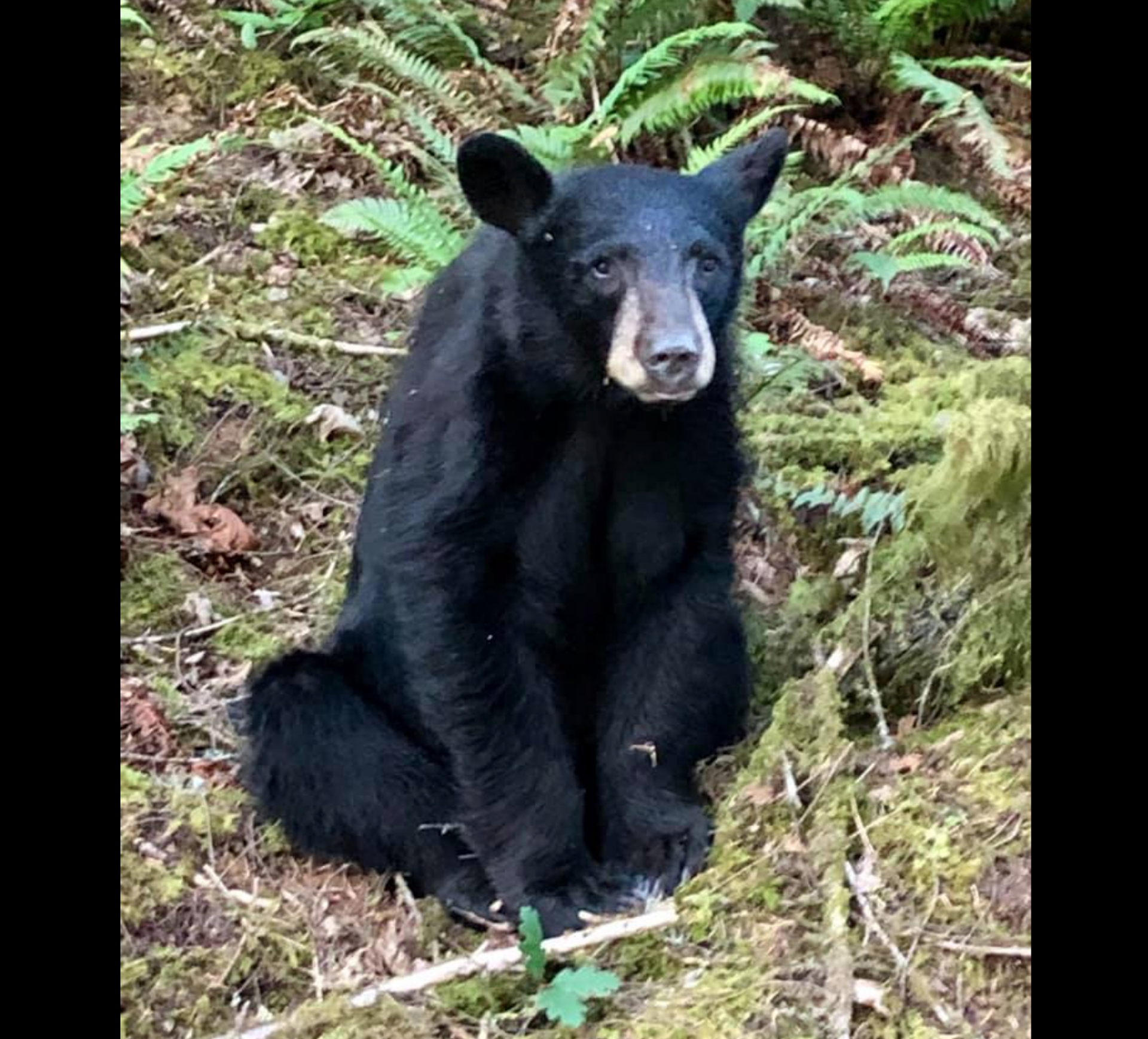 People ignored the rules to snag selfies with a young bear. Wildlife officials had to euthanize him.