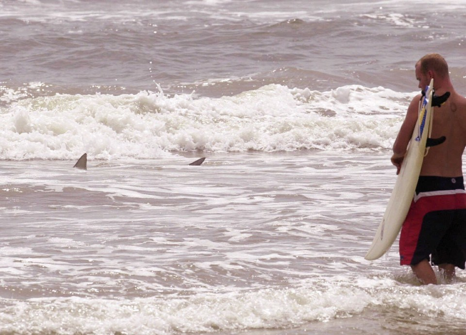Warm Ocean Waters Bring An Unwelcome Resident To The Outer Banks Bull Sharks The Washington Post
