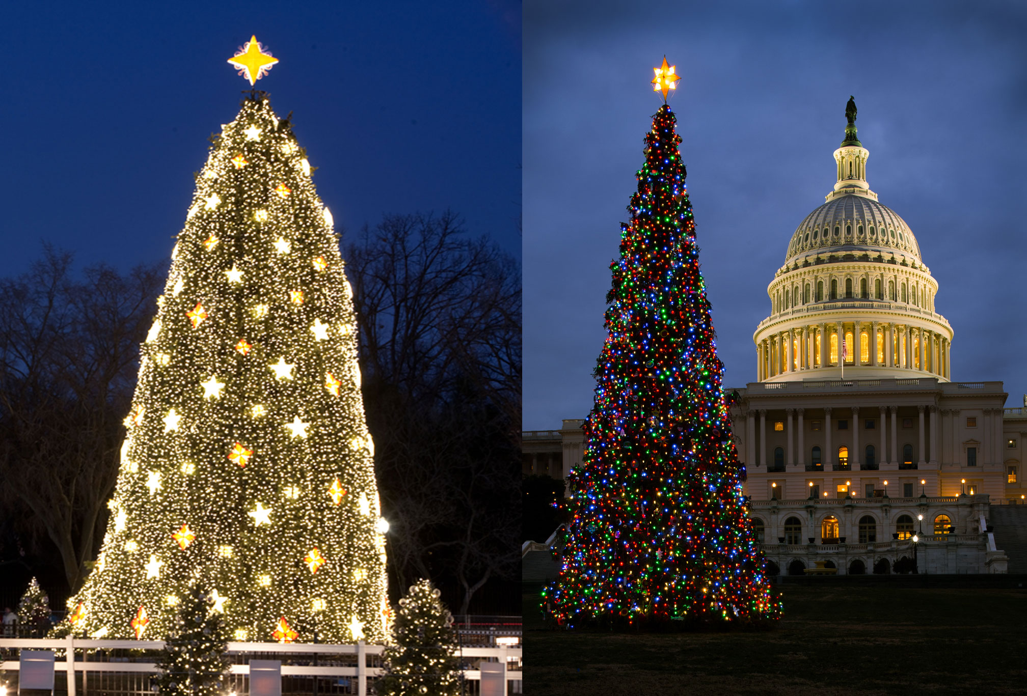 Capitol Christmas Tree.The White House Christmas Tree Vs Congress S Tree Which Is