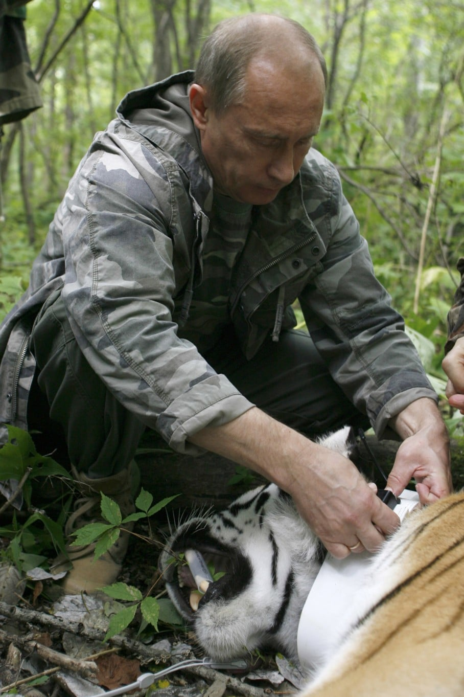 What S Up With Tough Guy Vladmir Putin S Love For Cute Animals The Washington Post