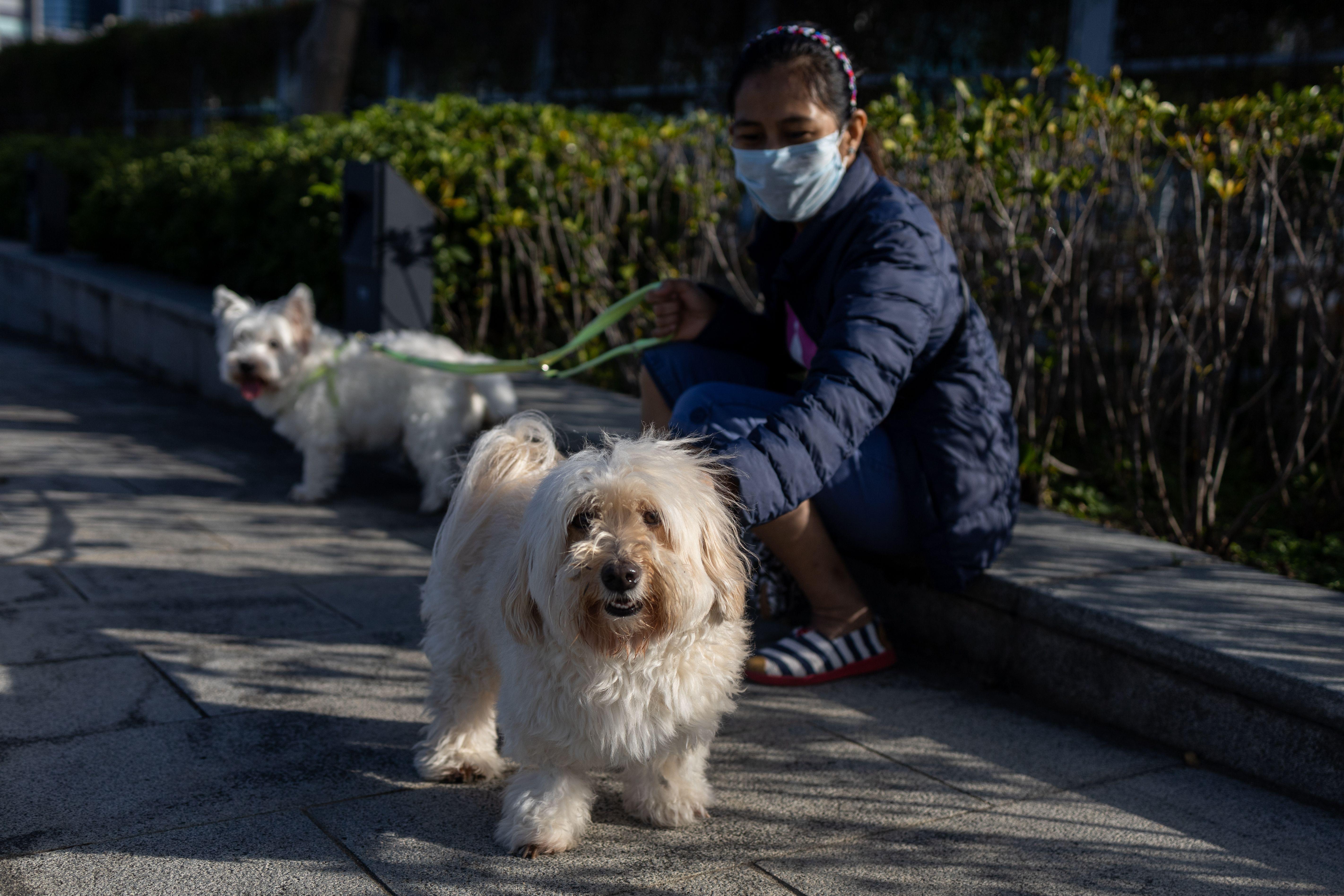Coronavirus infection in dogs