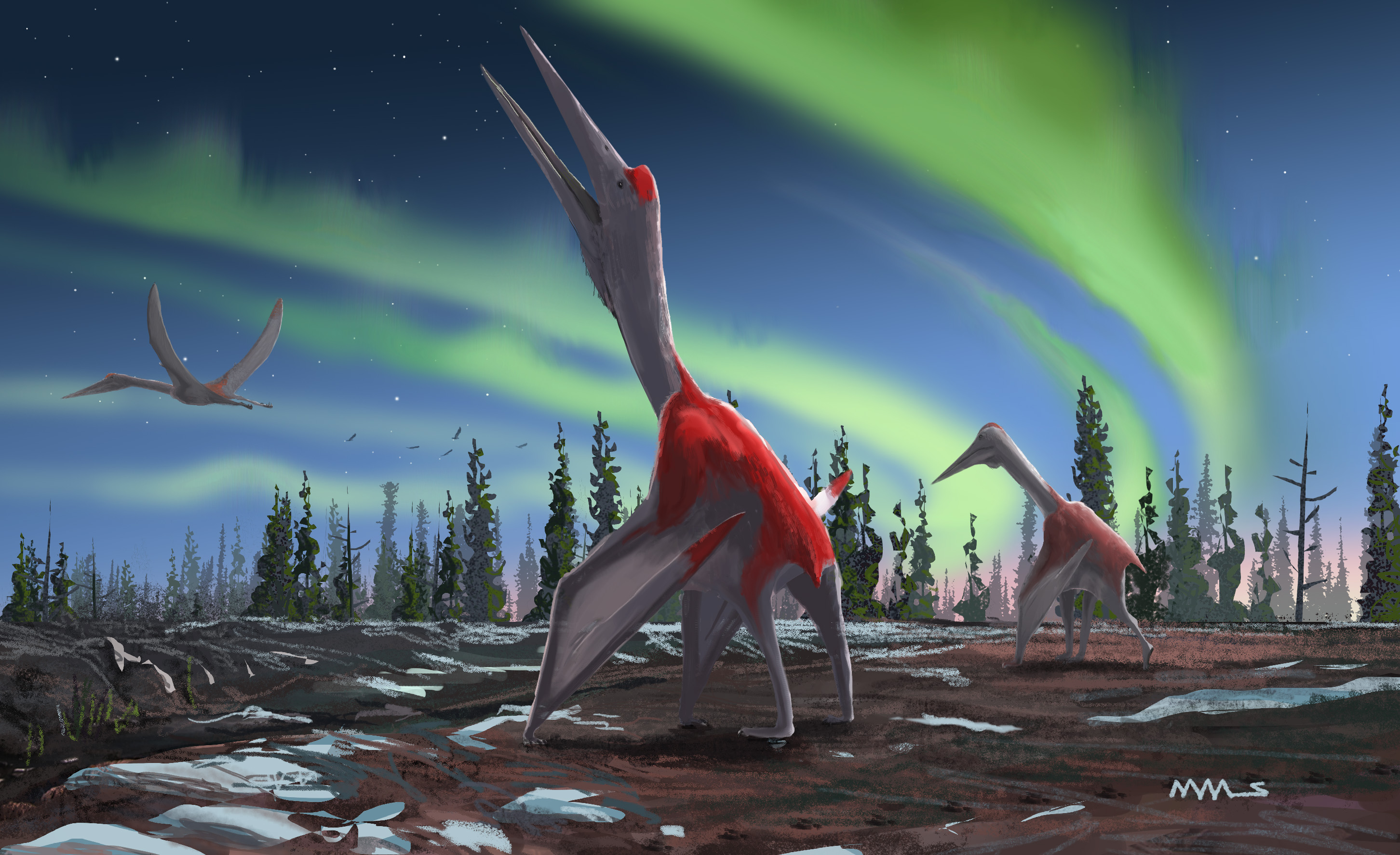 'Frozen dragon of the north wind': Species of pterosaur flew over North America 77 million years ago, scientists say - The Washington Post