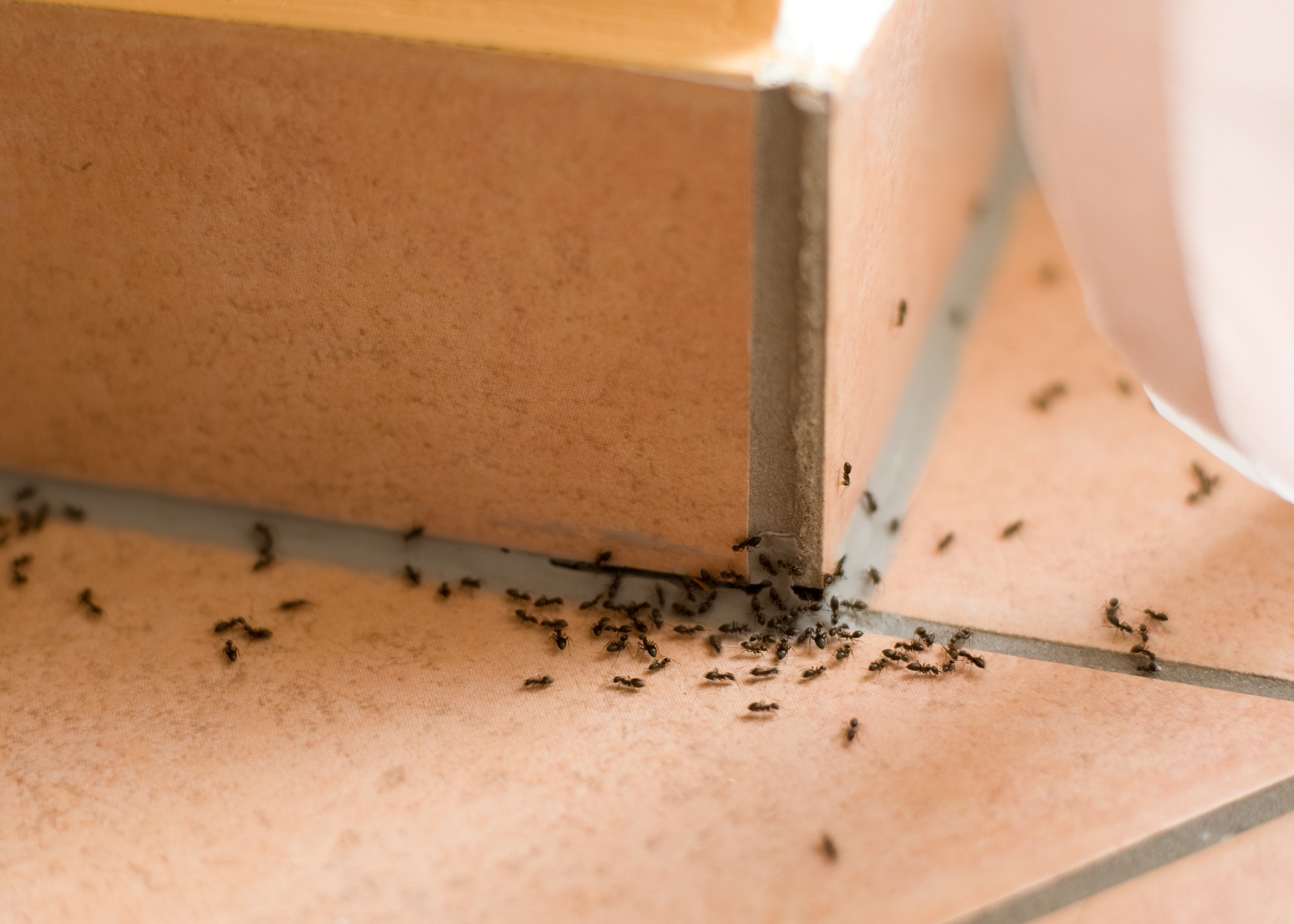 The Trick To Getting Rid Of Ants For Good It S Not A Spray The Washington Post