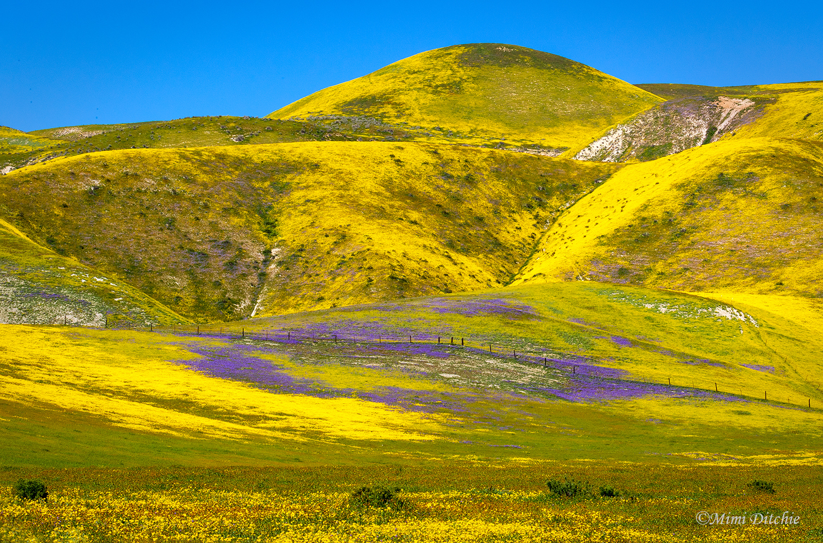 Observed On One Of Green Hills Of Blue >> California S Super Bloom Is The Best In Years So Vibrant It Can Be