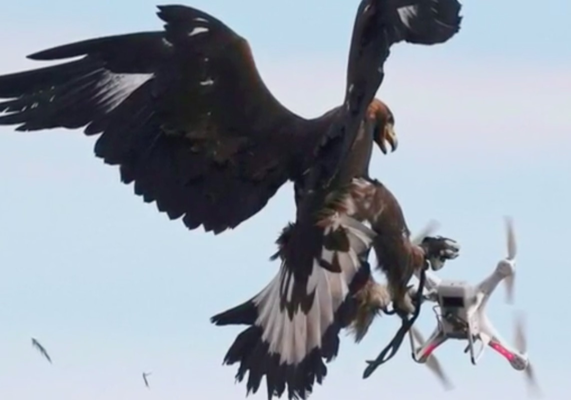Terrorists are building drones. France is destroying them with eagles. -  The Washington Post