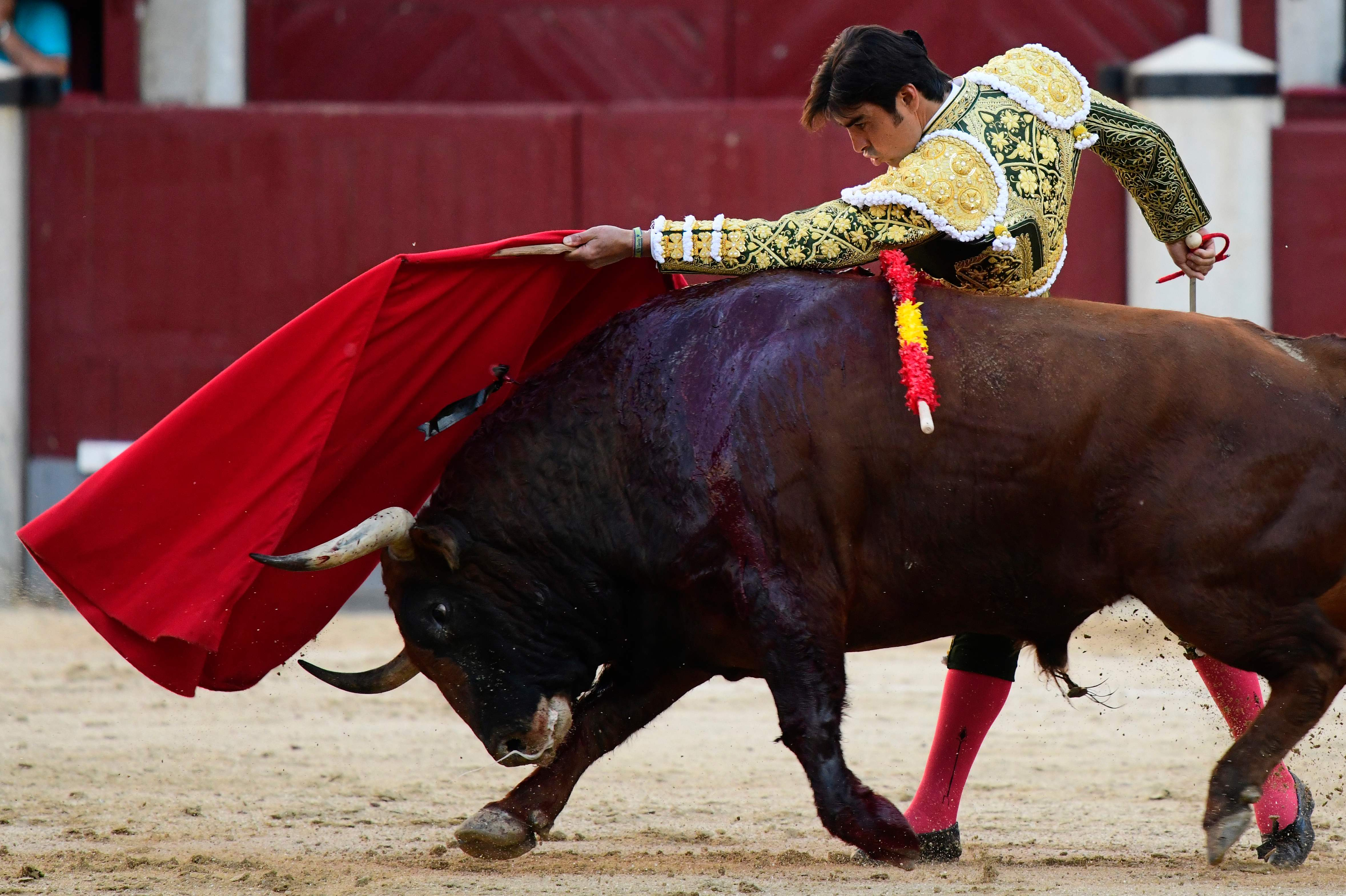 Activists Cry Torture After Matador Wipes The Nose Of A Dying