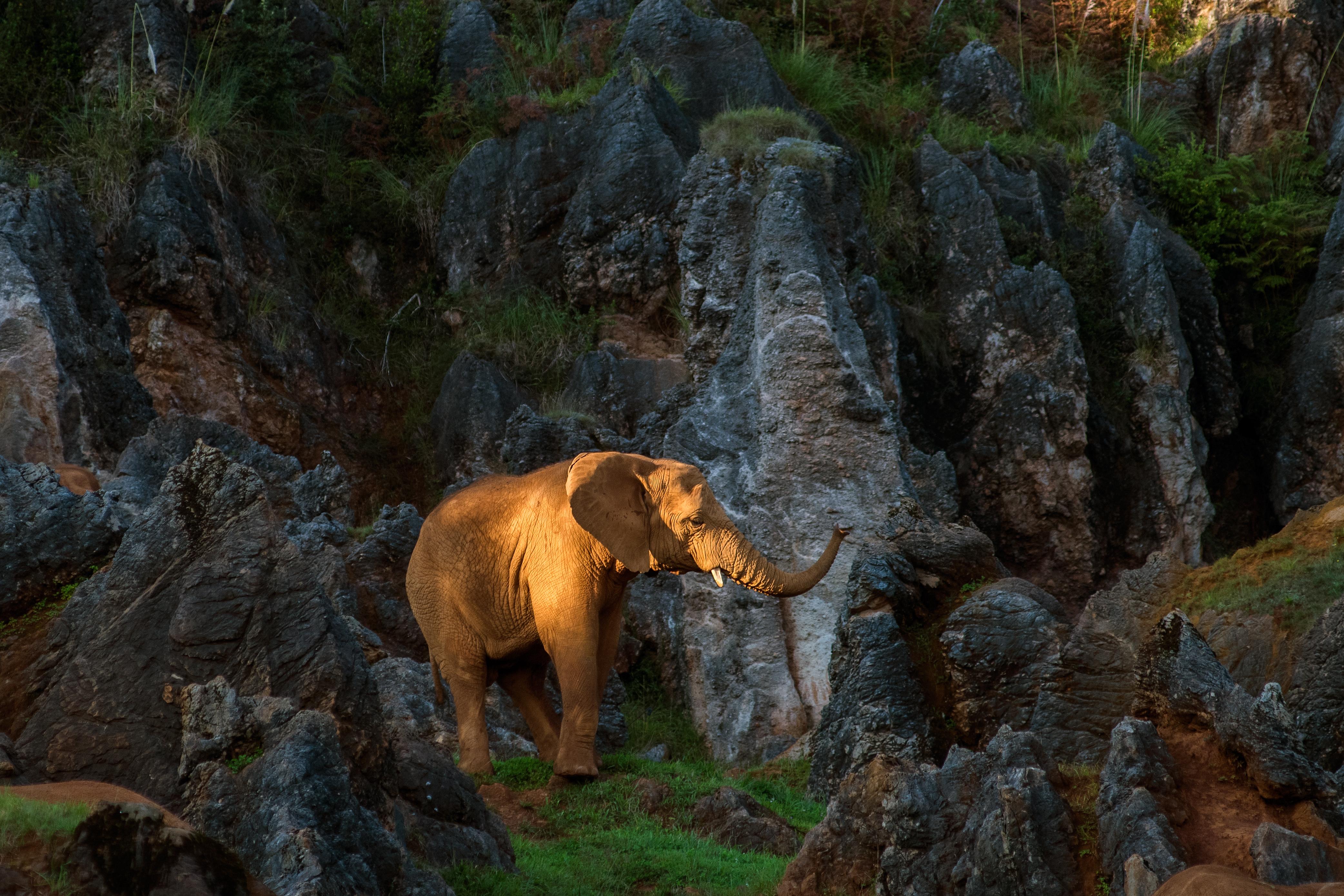 washingtonpost.com - David Kohn - Rarity of cancer in elephants may help explain cancer in humans
