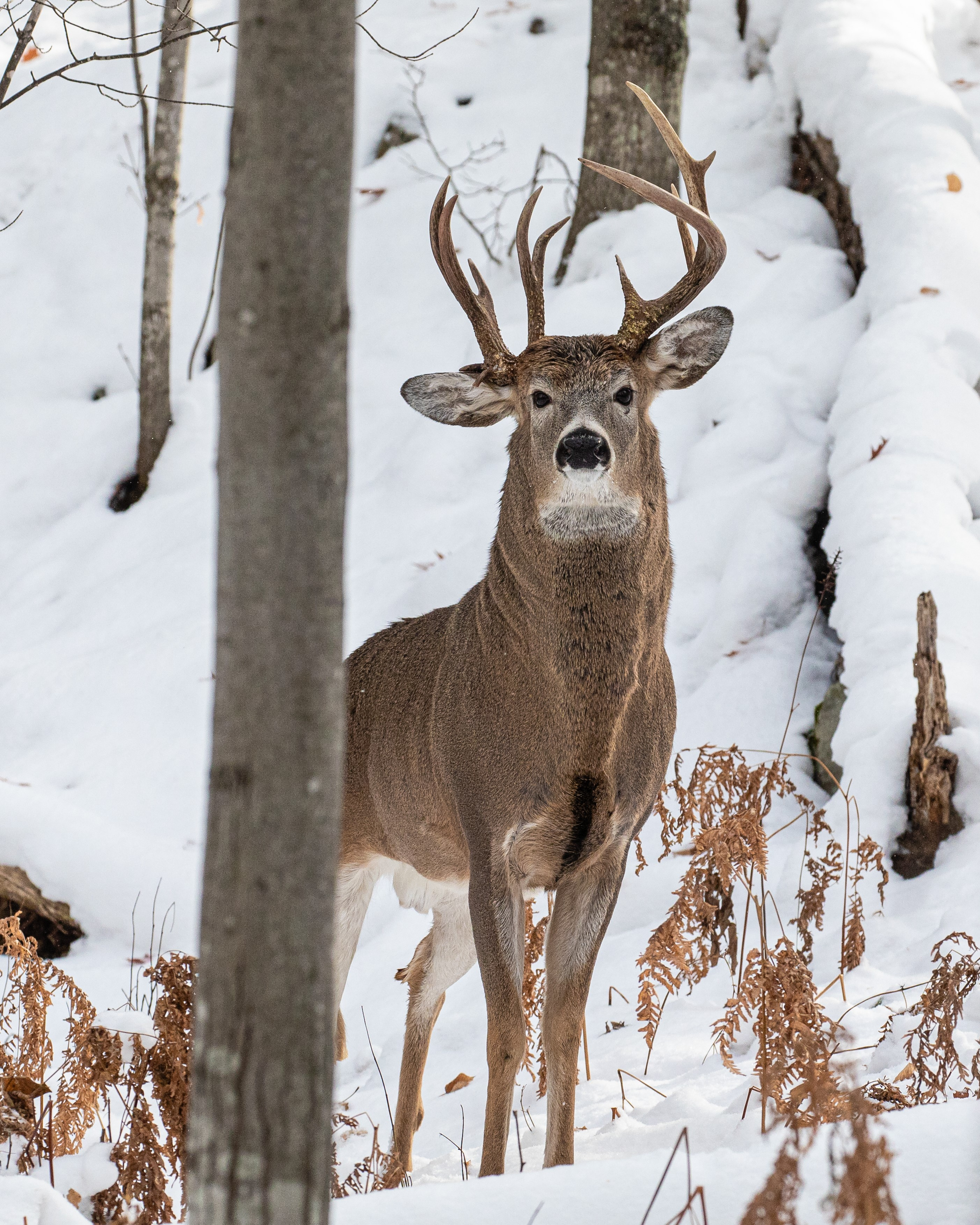 Three-antler deer spotted in Michigan's Upper Peninsula by Steven Lindberg  - The Washington Post