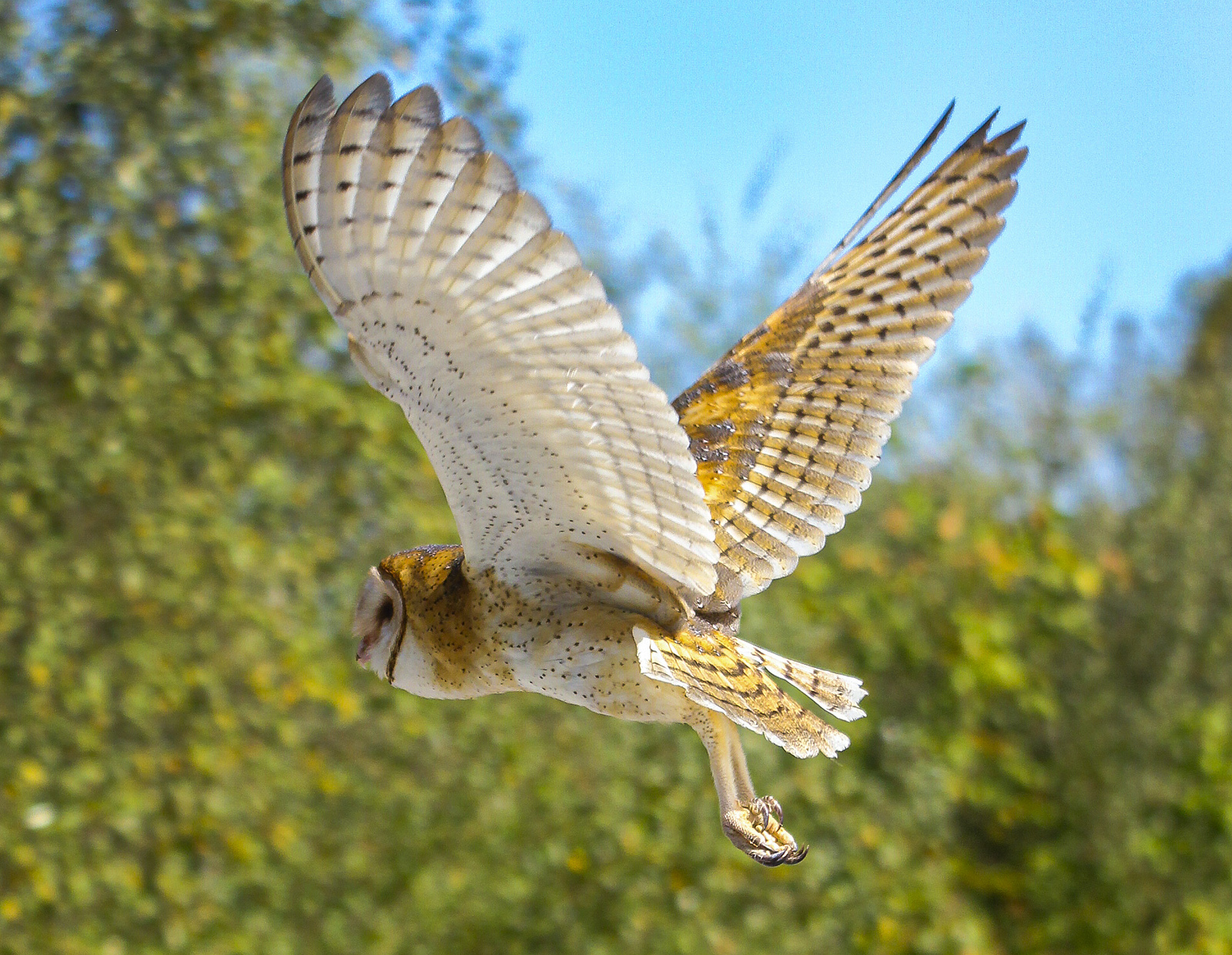 The Owl Pellet Economy Meet The Entrepreneurs Who Ve Devoted Their Lives To Bird Vomit The Washington Post