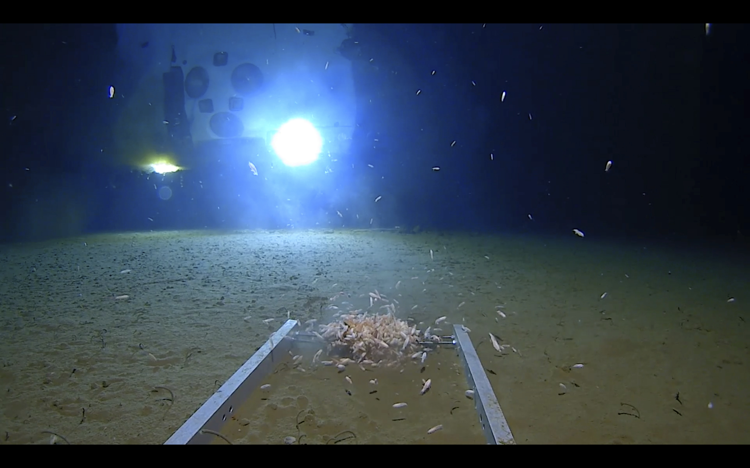 Mariana Trench Dive American Explorer Finds Trash At The
