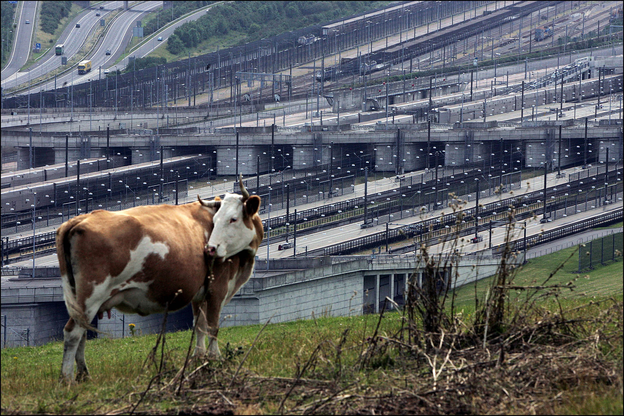 A cow grazes above the Eurotunnel complex near Folkestone, U.K. Saturday, July 24, 2004. Eurotunnel SA, which operates the railway tunnel linking Britain and France, said its first-half loss widened as passenger and freight revenue fell.